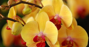 Детка орхидеи укоренение в мхе