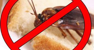 Службы для уничтожения насекомых