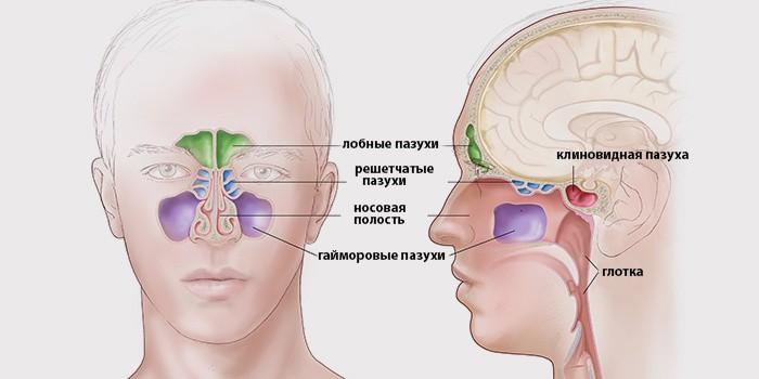 gde sdelat rentgen pazuh nosa